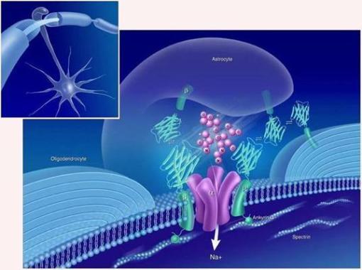 Canal de sódio numa sinapse